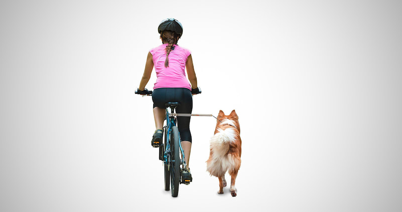 Hands Free Dog Bicycle Exerciser Leash