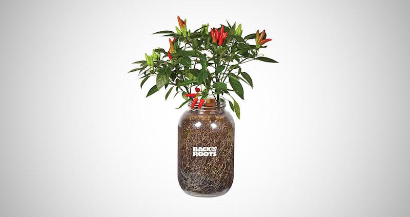 Organic Chilli Peppers Grow Kit