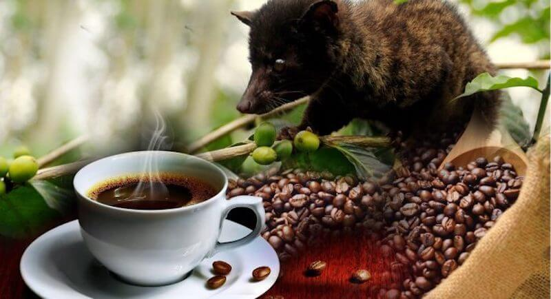 The World's Most Expensive Coffee - US$700 / kilogram