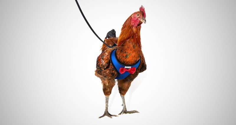 Yesito Chicken Harness