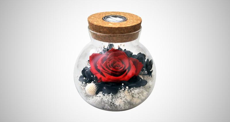 Forever Red Rose