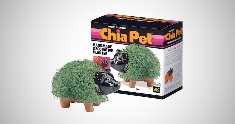 Chia Pet Pig