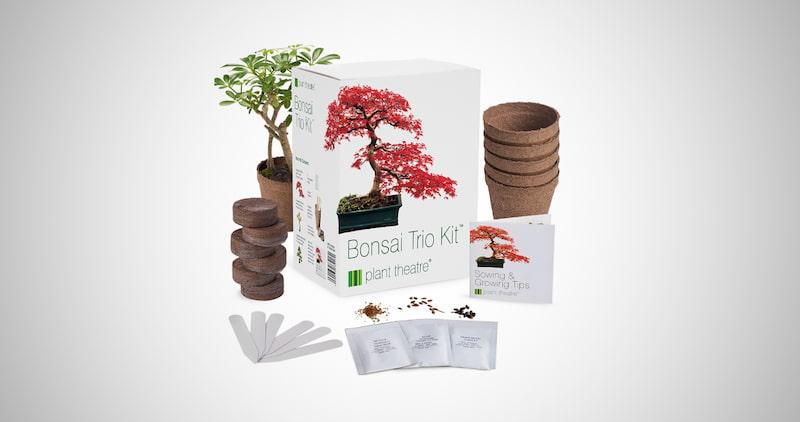 Plant Theatre Bonsai Trio Kit