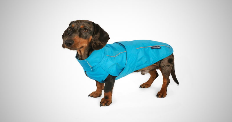All-Weather Dog Jacket