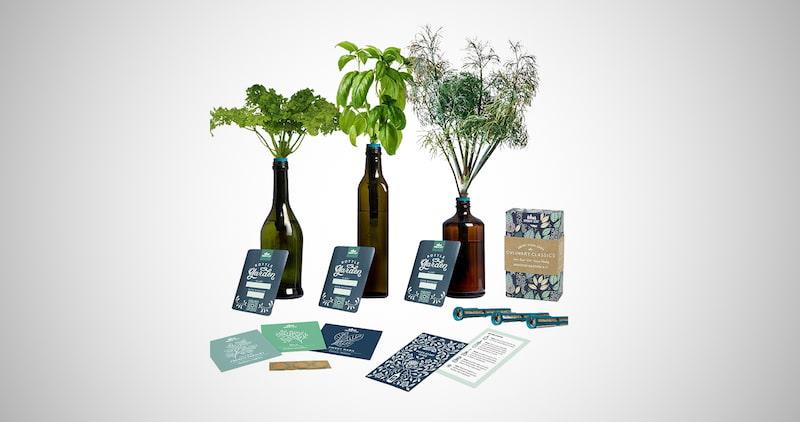 Windowsill Herb Garden Starter Kit