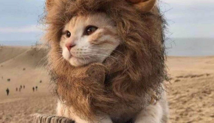 Lion Wig Costumes